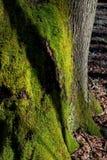 Boomboomstam in een bos Royalty-vrije Stock Afbeeldingen