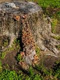 Boomboomstam en Paddestoelen Stock Fotografie