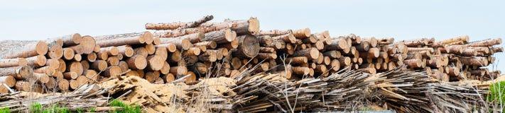 Boomboomstam Gebruikt voor scherp hout op raad royalty-vrije stock afbeelding