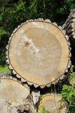Boomboomstam insnijding Textuur van de groeiringen van esp en houten barsten royalty-vrije stock foto's