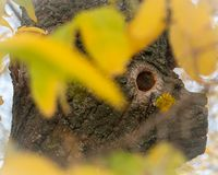 Boomboomstam met een oog stock fotografie
