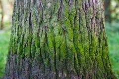 Boomboomstam met groene banden Stock Afbeelding