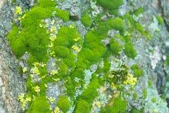 Boomboomstam met mos royalty-vrije stock afbeelding