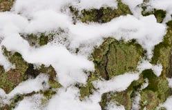 Boomboomstam met sneeuw, schorsclose-up Royalty-vrije Stock Foto