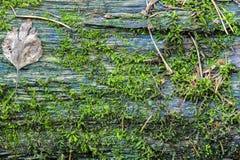 Boomboomstam met textuur van de mos de Horizontale foto royalty-vrije stock afbeelding
