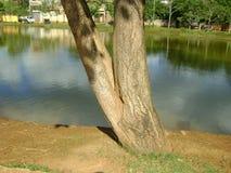 Boomboomstam, naast de rivier, met schaduwen van de bomen in de wateren royalty-vrije stock foto's