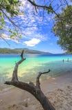 Boomboomstam op een strand dichtbij een overzees Stock Afbeeldingen
