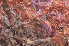 Boomboomstam in Van angst verstijfd Forest National Park in Arizona Stock Foto