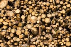 Boomboomstammen Stock Afbeeldingen