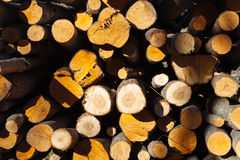 Boomboomstammen bij de zaagmolen stock fotografie