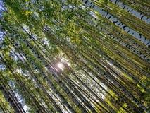 Boomboomstammen die omhoog eruit zien De lente Forest Scene royalty-vrije stock afbeeldingen