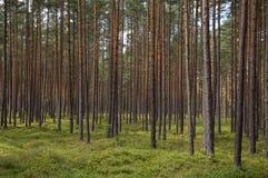 Boomboomstammen in een bos Stock Afbeeldingen