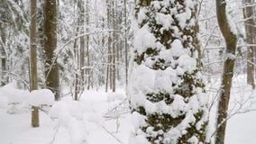 Boomboomstammen en takken met dikke laag van verse pluizige sneeuw worden behandeld die stock video
