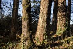 Boomboomstammen met mos in een zonnig bos met bladeren en schors stock afbeeldingen