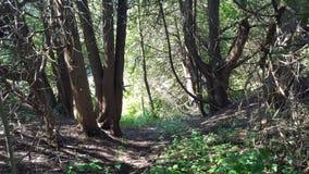 Boomboomstammen in Schaduwrijk Bos stock afbeelding