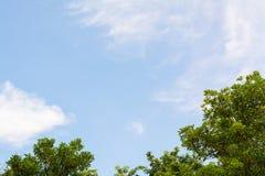 Boombovenkant met blauwe hemelachtergrond Stock Foto's