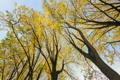Boombovenkanten met reeds vergeelde die bladeren tegen B worden gesilhouetteerd stock afbeeldingen