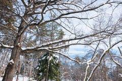 Boombovenkanten met takken met sneeuw in het park in de wintertijd met zonlicht worden behandeld dat royalty-vrije stock fotografie