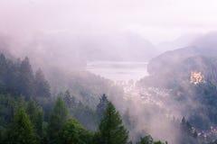 Boombovenkanten van een bos met veel mist royalty-vrije stock foto's