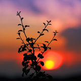 Boombrunch op de achtergrond van de zonsonderganghemel Stock Afbeelding