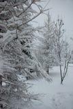 Boombrunches met dikke laag van sneeuw in de winter worden behandeld die stock foto's