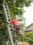 Boomchirurg die een ladder beklimmen Royalty-vrije Stock Afbeelding