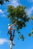 Boomchirurg die onderaan een avocadoboom hakken stock afbeeldingen