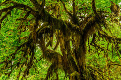 Boomclose-up met mos wordt behandeld dat Royalty-vrije Stock Afbeeldingen