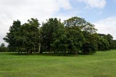Boomcluster in Park Stock Fotografie