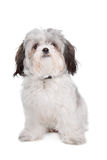 Boomer dog Stock Photography