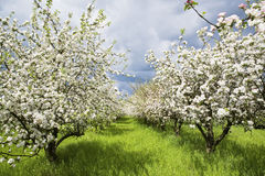 Boomgaard 2 van de lente stock afbeelding