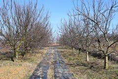 boomgaard Stock Afbeeldingen