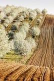 Boomgaard in de lente Royalty-vrije Stock Fotografie