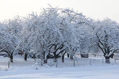 Boomgaard in de winter stock afbeeldingen