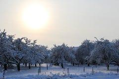 Boomgaard in de winter Royalty-vrije Stock Foto's