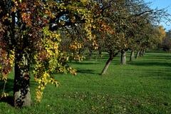 Boomgaard met de Kleuren van de Herfst Stock Foto