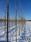 Boomgaard met sneeuw in de winter wordt behandeld die Royalty-vrije Stock Foto's