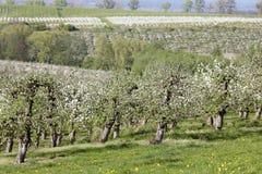 Boomgaarden stock afbeelding