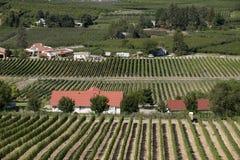 Boomgaarden en wijngaarden Stock Foto