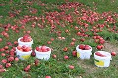 Boomgaarden in Quebec in de herfst Stock Fotografie