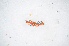 Boomgebladerte in Ijs en Sneeuw Stock Foto