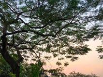 Boomhemel na zonsondergang Royalty-vrije Stock Afbeeldingen