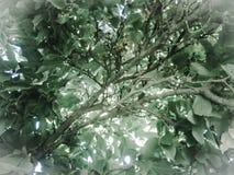 Boomhoogtepunt van groene bladeren royalty-vrije stock afbeeldingen