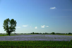 Booming plans. Field of blooming plants Stock Images