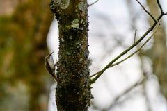 Boomklimplant die insecten zoeken royalty-vrije stock afbeelding
