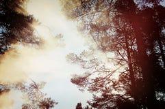 Boomkroon met een schijnsel van zonlicht, donkere wijnoogst stock afbeeldingen