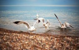 Boommeeuwen op het meer in de beweging Stock Foto