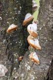Boompaddestoel in de herfst Royalty-vrije Stock Afbeelding