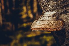 Boompaddestoel in het bos royalty-vrije stock afbeeldingen