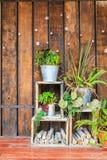 Boompot op planken voor houten muur Royalty-vrije Stock Foto